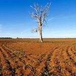 Tényleg globális élelmiszerválság van kialakulóban?