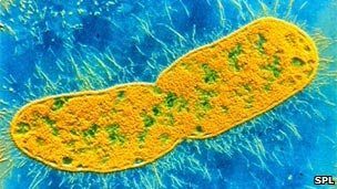 NDM-1 is carried by Gram-negative bacteria like Klebsiella