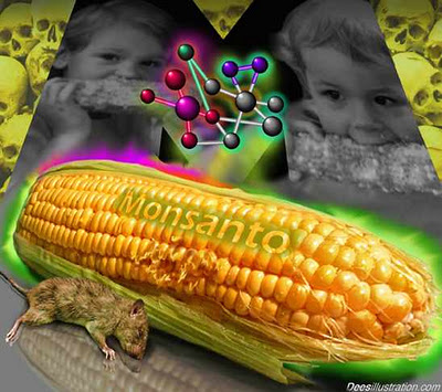 Monsanto&#8217;s GMO Corn Linked To Organ Failure, Study Reveals