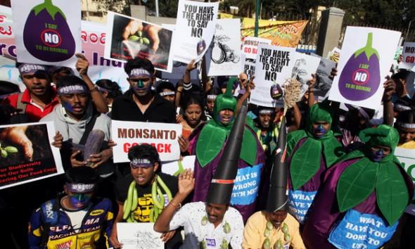 Indiai tüntetők a Monsanto genetikailag módosított padlizsánjának felhasználása ellen tiltakoznak