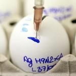 A H5N1 madárinfluenza vírus egy kis beavatkozással milliókat fertőzhet meg