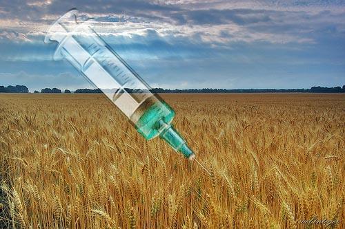 Biotech farmok: Vakcinák és gyógyszerek a GMO termésben