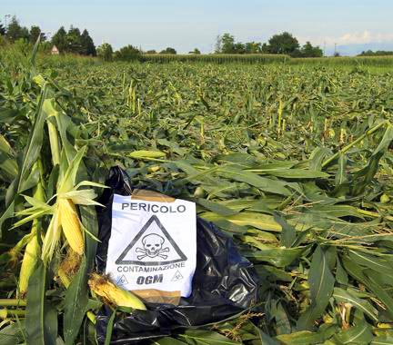 Biotech industry wants organic farmers to pay for GMO contamination of their own crops