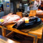 bluefin-tuna