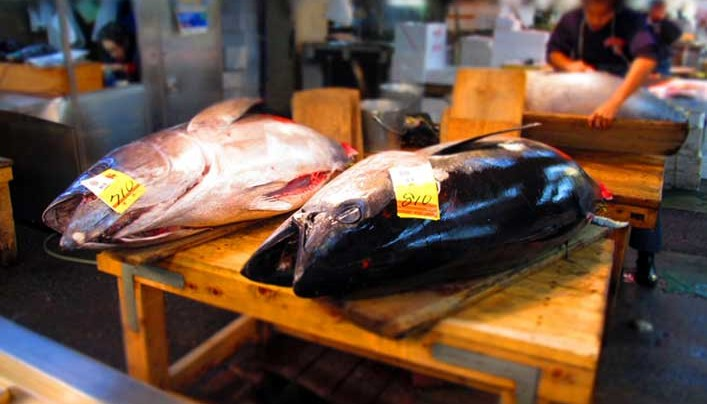 Tuna caught near California still have traces of Fukushima radiation