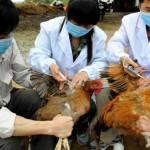 Egy köhögéssel kezdődött: Az új madárinfluenza vírus