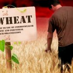 GM-Wheat-Field-(1)