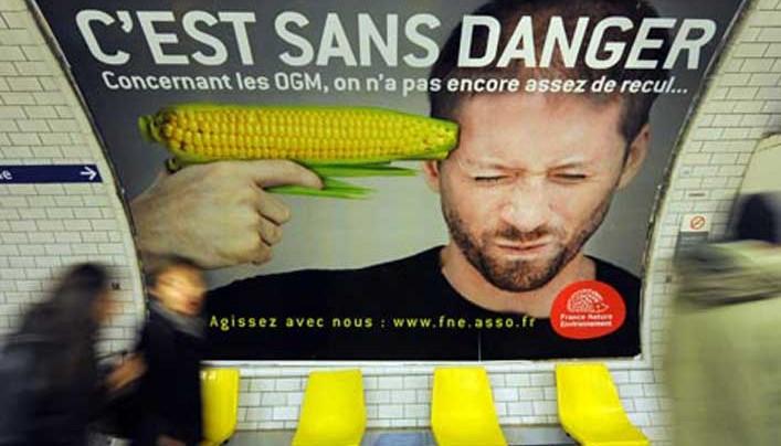 A parlamenti éttermekben tiltják, a lakosságnak ajánlják a GMO-k fogyasztását Angliában