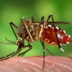 GMO Mosquito Trial Has Reverse Effect, Causes Dengue Emergency
