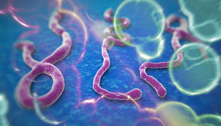 CDC and WHO warn of 1.4 million Ebola cases by January
