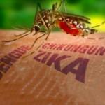 Zika vírus és kisfejűség: Járvány vagy paranoia? Eltúlzott számok és elhallgatott okok