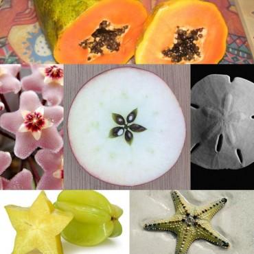Pentagram_Fruit_resistance_2010